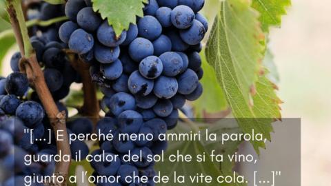 Winequote Buracchi 2
