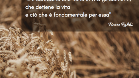 Winequote Buracchi 1